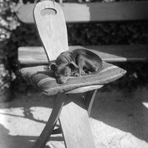 """Petit chien au soleil / """"Nana"""" le chien du château du Tremblay, 1882"""