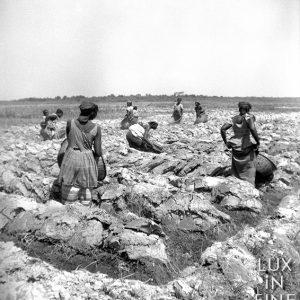 Travail aux champs au Ségénal / 1947