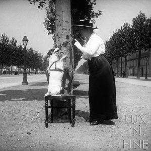 Chien savant, Champs Elysées, 1905 - NE045191